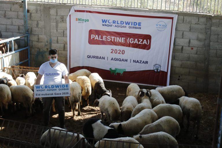 Qurban Palestin 2020