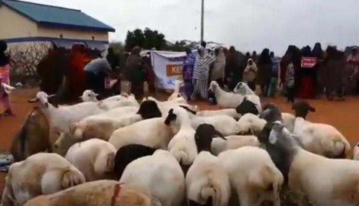 Qurban Kenya 2020